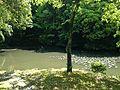 Hishigataike Pond in Usa Shrine 6.JPG