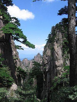 Pine - Huangshan pine (Pinus hwangshanensis), Anhui, China