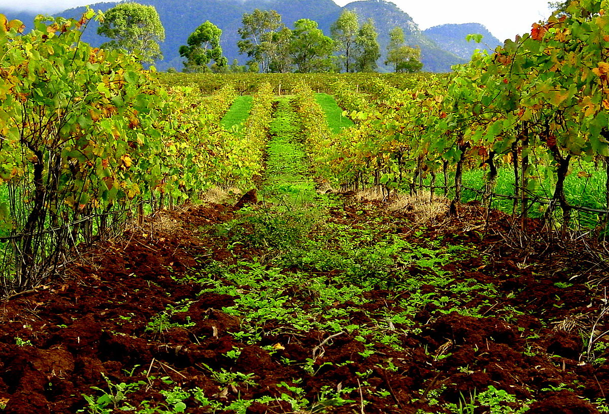 Hunter Valley wine - Wikipedia