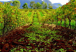 Hunter Valley Means Vineyards.jpg