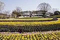 Hyogo Prefectural Flower Center Kasai Japan03bs.jpg