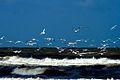 IJmuiden-beach-2013-17 (9043396073).jpg