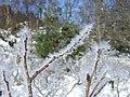 Ice crystals, Loch an Eilein - geograph.org.uk - 1715120.jpg