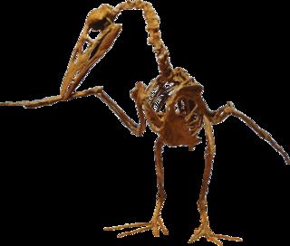 <i>Ichthyornis</i> genus of birds (fossil)
