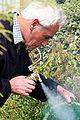 Imker Kwakkel schept een zwerm bijen 008.jpg