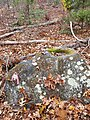 Indian grinding stone mortar on Legion Trail near the Legion Cabin at Nobscot Scout Reservation on Nobscot Hill in Sudbury and Framingham Massachusetts MA USA.jpg