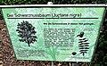 Infotafel Schwarznussbaum.jpg