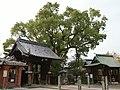 Inner shrines and old camphor tree in Ushijima Tenmangu Shrine.jpg