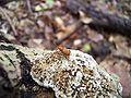 Insekt 2.JPG