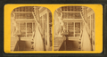 """Interior of the """"marine museum"""" showing cases, bones and sculpture, from Robert N. Dennis collection of stereoscopic views.png"""