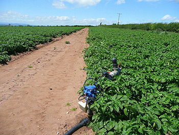 English: Irrigation equipment. Potatoes need a...