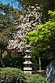 Japanese Friendship Garden (4526446397).jpg