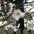 Japanese Gardens Flowers 2.jpg