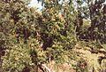 Jardin de Pamplemousses (3000869217).jpg