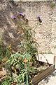 Jardin du château de Dourdan le 2 août 2013 - 12.jpg
