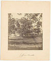Jefferson Barracks (St. Louis, Mo.) - (Two long wooden singl... (3110019689).jpg