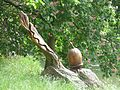 Jephson Gardens, Leamington Spa - wooden carving (27054794340).jpg