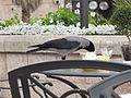 Jerusalem Tea at the David Hotel (4159816663).jpg