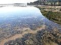 Jervis Bay Marine Park.jpg