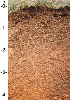Jory (soil) soil type