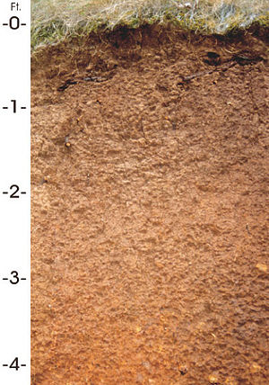 Jory (soil) - Soil profile