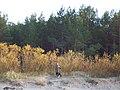 Jurmala beach - panoramio - Paul Berzinn (1).jpg