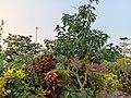 Kadri Park in Mangalore - 3.jpg