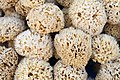 Kalymnos sponges 3.jpg