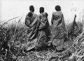 Kap-Kairo expeditionen, Publicerad i Träskfolket 1916, Pl.40. Bangweulusjön. Zambia - SMVK - 000468.tif