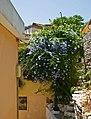 Kavala Greece 13.jpg