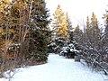 Kerry Wood Nature Conservatory (32599571020).jpg