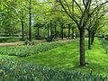 Keukenhof Garden (62).JPG