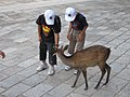 Kids feeding a deer (5015573083).jpg