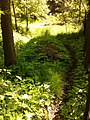 Kijárt ösvény - panoramio.jpg