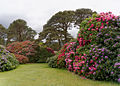 Killarney National Park - Muckross Garden.jpg