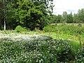 Koitsanlahti garden.JPG