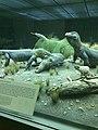 Komodo Dragon Diorama.jpg