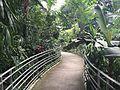 Krohn Conservatory Walkway.jpg