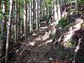 Kumano Kodo Dainichigoe World heritage26.JPG