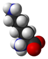 L-lysine-monocation-from-hydrochloride-dihydrate-xtal-3D-vdW.png