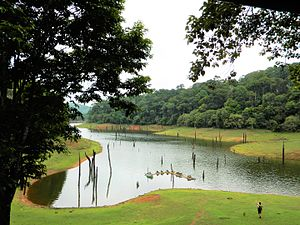 Periyar National Park - Periyar Lake