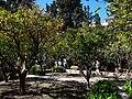 La Seu, 07001 Palma, Illes Balears, Spain - panoramio (52).jpg