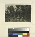 La petite forêt, hiver (NYPL b14923834-1226139).tiff
