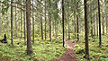 Laajavuori nature trail3.jpg