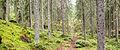 Laajavuori nature trail6.jpg