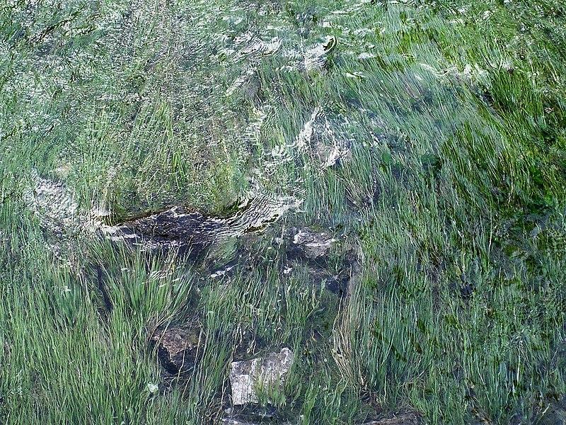 File:Lago di Braies,Pragser Wildsee - panoramio (3).jpg