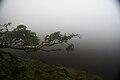 Lagoa do Paul, por entre as brumas, Concelho da Madalena do Pico, ilha do Pico, Açores, Portugal.JPG