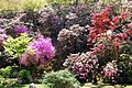 Landscape blooming rhododendron - panoramio.jpg