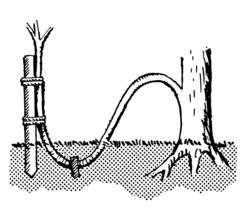 enciclopedia de la propagacin de plantas