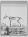 Le Loup, Squelette - Wolf, Skeleton - Gallica - ark 12148-btv1b2300254t-f5.png